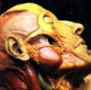 LYMPHATIC PHLEGM - Digipak CD - Show-off Cadavers - The Anatomy of Self Display